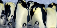Scientists alarmed by disappearing penguin population at Antarctic breeding ground