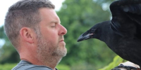 'A good connection': How a pub landlord wound up raising ravens hatched at the Tower...