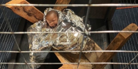 Nativity scene puts baby Jesus in a cage with solar blanket, like would-be migrants to...